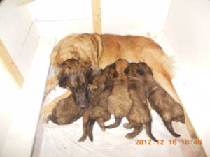 Ripple and her 5 pup in Dec 2012